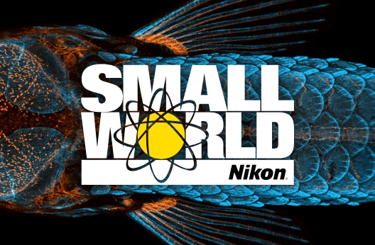 Nikon's Small World